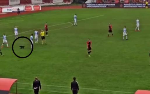 Hond onderbreekt voetbalwedstrijd en poort speler twee keer